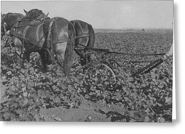 Horse Farm Greeting Cards - A Farmer Using A Cultivator  Greeting Card by American School