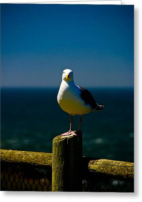 Sea Birds Greeting Cards - A Fence Post Layover Greeting Card by Laddie Halupa