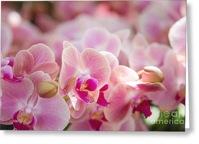 A Field Of Flowers Greeting Card by A New Focus Photography