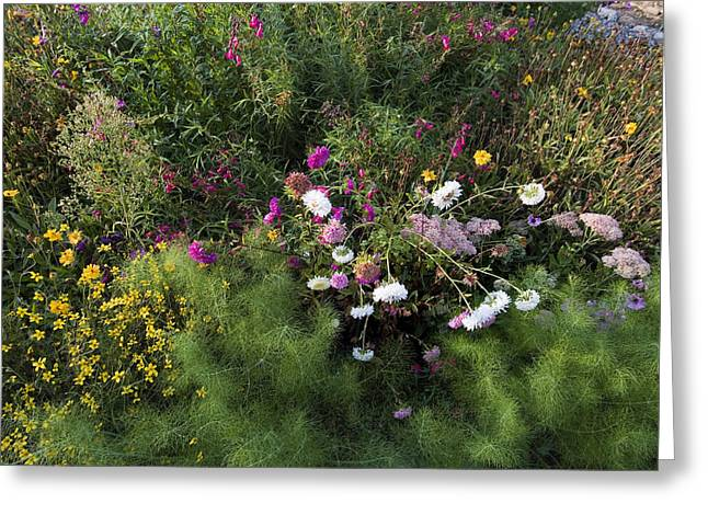 Chianti Greeting Cards - A Field Of Wildflowers In Tuscany Greeting Card by Todd Gipstein
