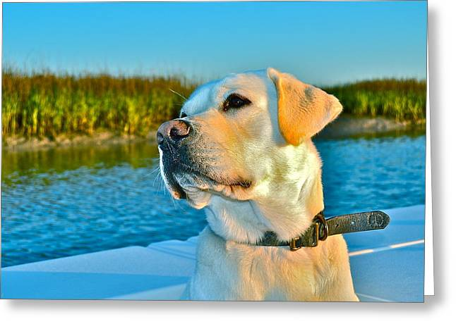 Fishing Boats Greeting Cards - A fishermans best friend Greeting Card by Jay Talbot