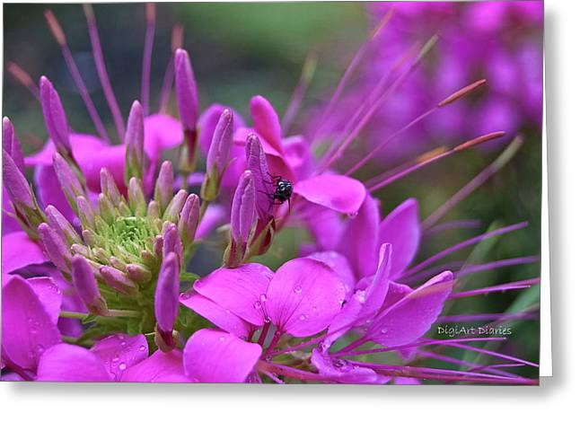 Diptera Greeting Cards - A Fly and a Flower Greeting Card by DigiArt Diaries by Vicky B Fuller