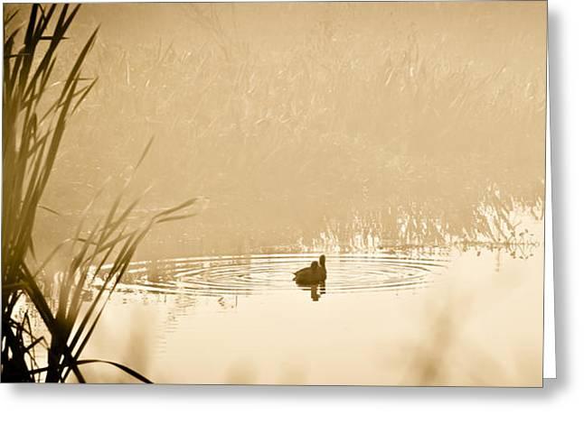Tree Leaf On Water Greeting Cards - A Foggy Morning Swim Greeting Card by Carolyn Marshall