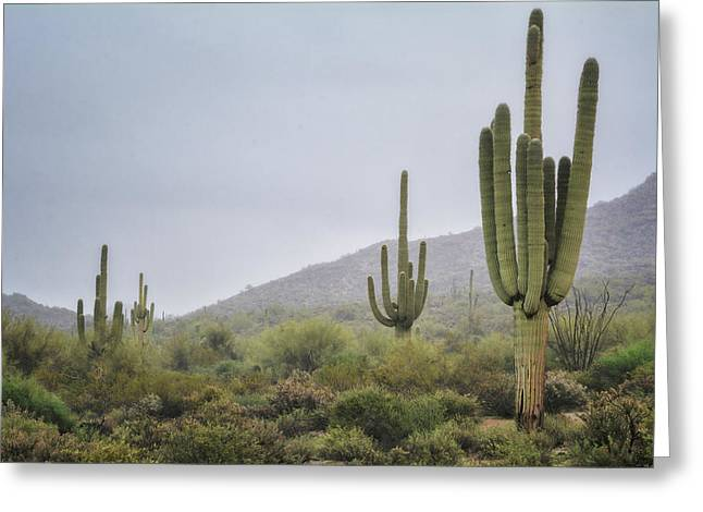 A Foggy Sonoran Day  Greeting Card by Saija Lehtonen