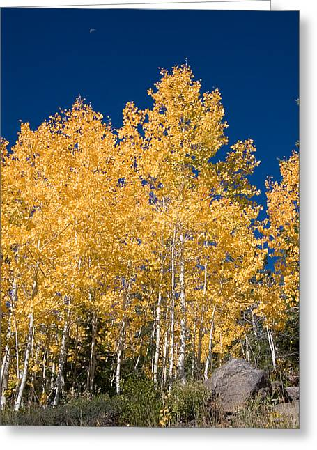 Color Change Greeting Cards - A Forest Changes Color As The Aspen Greeting Card by Taylor S. Kennedy