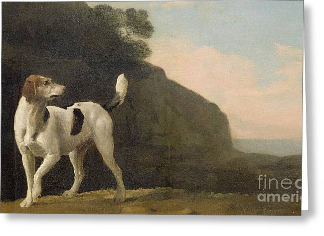 Lay Greeting Cards - A Foxhound Greeting Card by George Stubbs