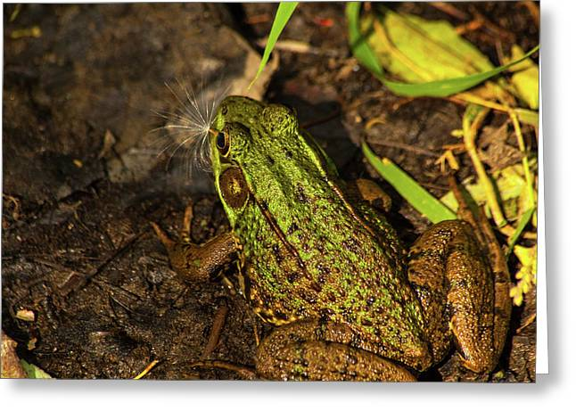 A Frogs Wish Greeting Card by Karol Livote