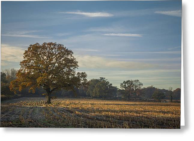 A Frosty Autumn Morning Greeting Card by Chris Fletcher