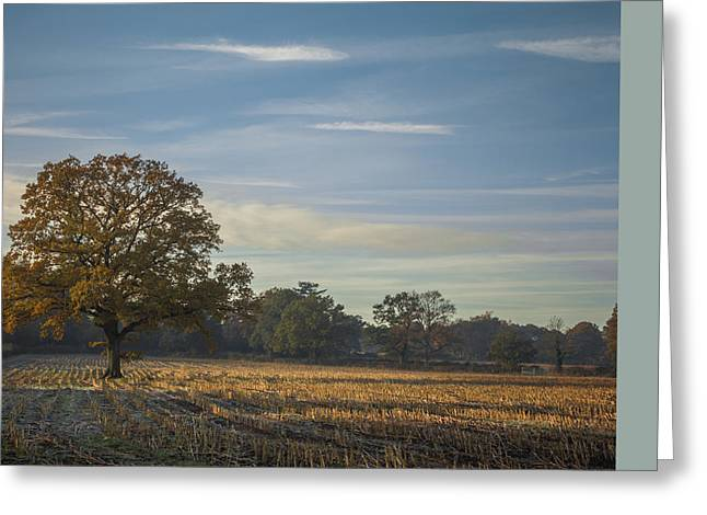 Tall Tree Greeting Cards - A frosty autumn morning Greeting Card by Chris Fletcher