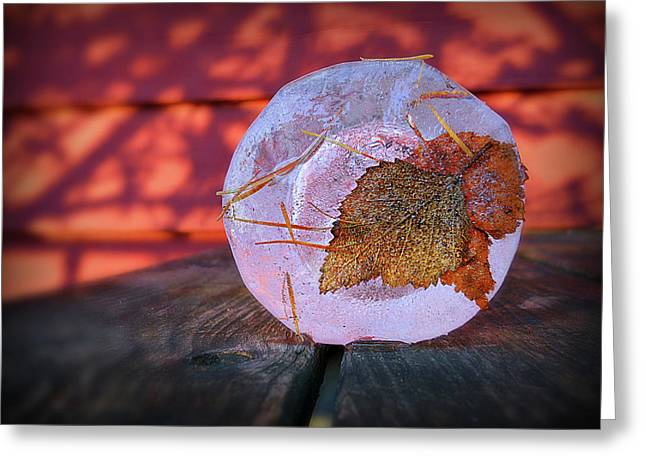 Pine Needles Greeting Cards - A Frozen Moment In Time Greeting Card by Paul Causie