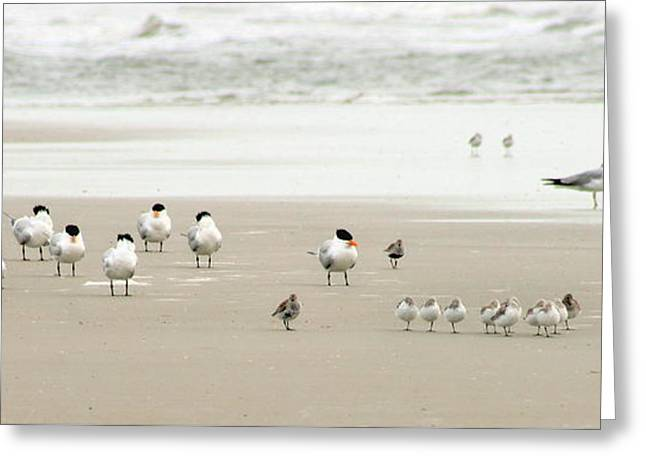 A Gaggle Of Seabirds Greeting Card by Angela Rath