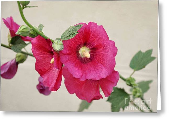 Flower Photos Greeting Cards - A Gentle Bloom Greeting Card by Reb Frost