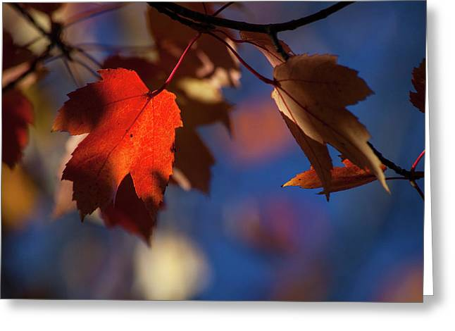 A Glimpse Of Autumn Greeting Card by Karol Livote