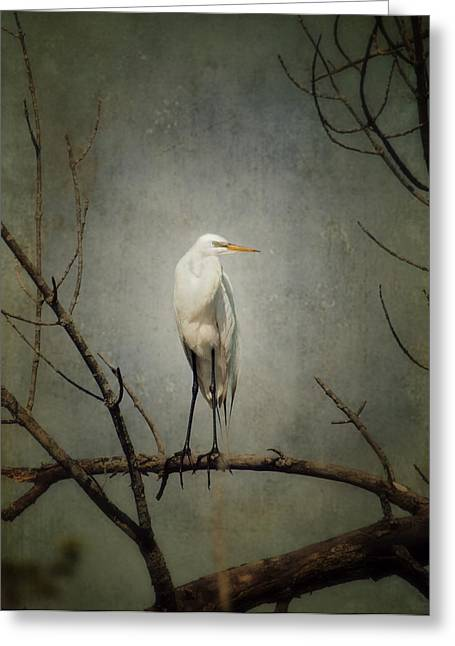 Great Egret Greeting Cards - A Great Egret Greeting Card by Al  Mueller