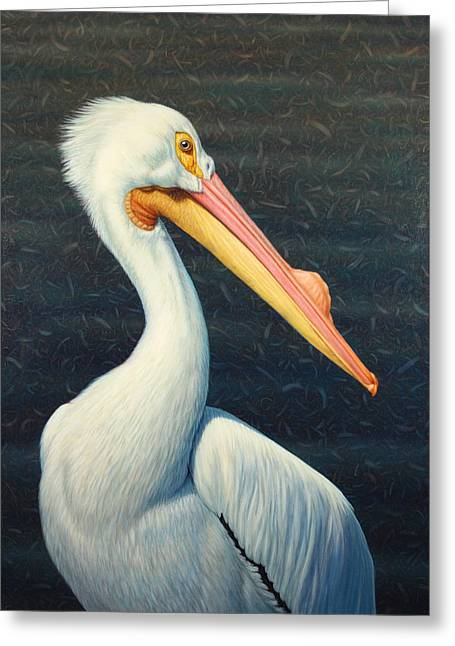 White Bird Greeting Cards - A Great White American Pelican Greeting Card by James W Johnson
