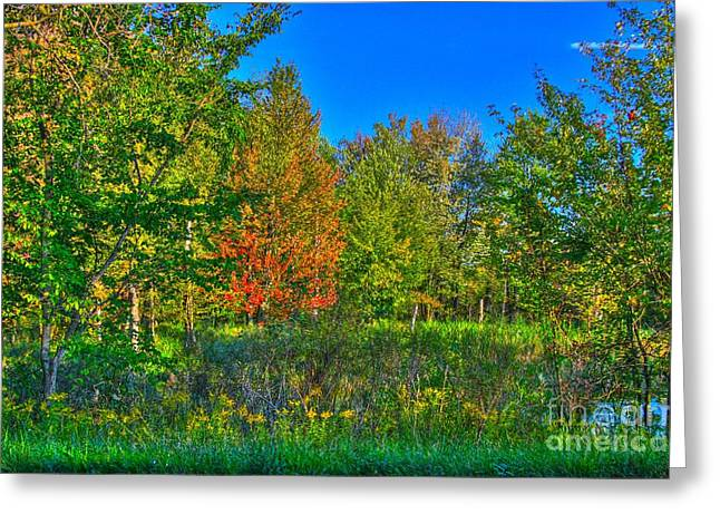 Scenic Artwork Greeting Cards - A hint off fall Greeting Card by Robert Pearson