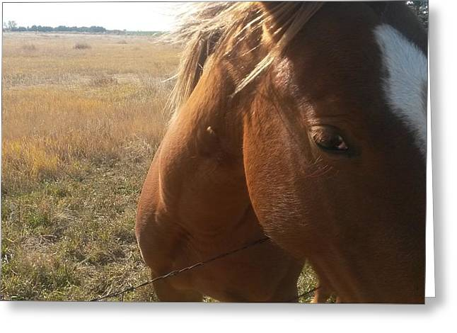 Eyelash Greeting Cards - A Horse I Met On A Walk On The Colorado High Plains #39 Greeting Card by Bryce Fellbaum