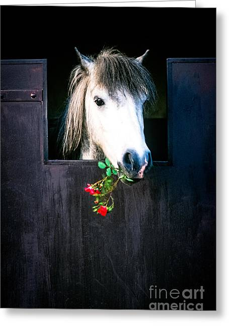 Horses Pyrography Greeting Cards - A Horse with Roses in  Chamonix Mont Blanc - Greeting Card by Cyril Jayant