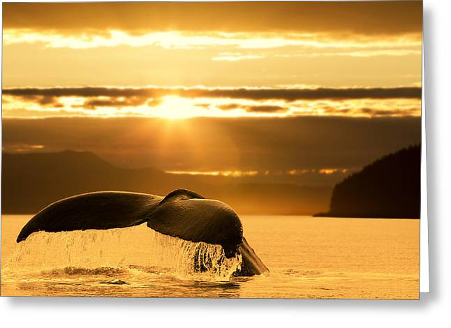 A Humpback Whale Returns To The Depths Greeting Card by John Hyde