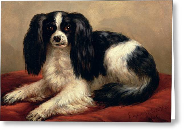 Cushion Greeting Cards - A King Charles Spaniel Seated on a Red Cushion Greeting Card by Eugene Joseph Verboeckhoven