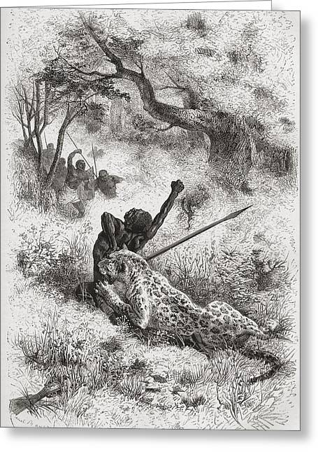Leopard Drawings Greeting Cards - A Leopard Attacking An African Native Greeting Card by Vintage Design Pics