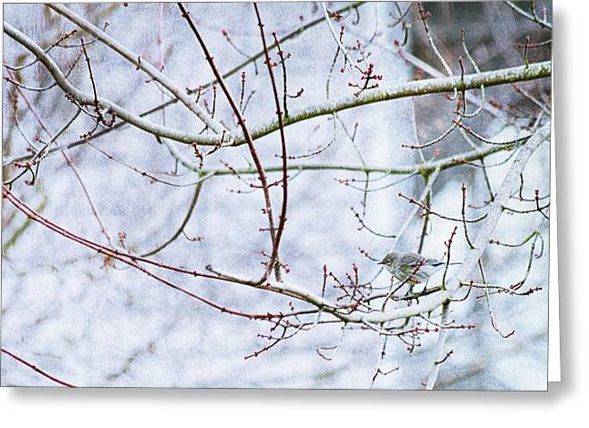 Holiday Photographs Greeting Cards - A Little Bird Told Me Greeting Card by Rebecca Cozart