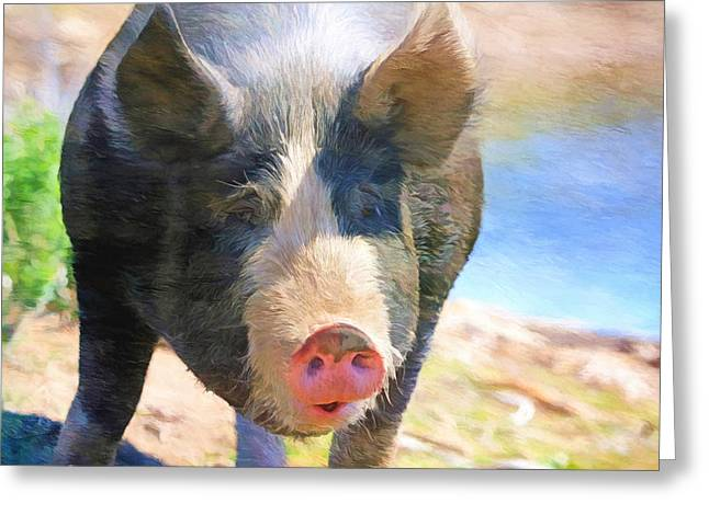 Pig Photographs Greeting Cards - A Little Bit Snooty Greeting Card by Donna Kennedy