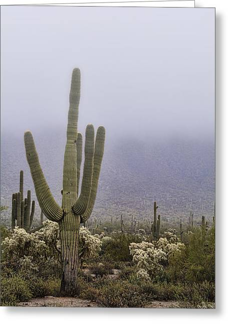 A Little Desert Fog  Greeting Card by Saija Lehtonen