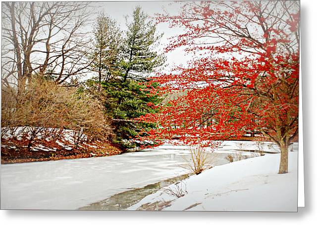 A Little Red On White Greeting Card by Diana Angstadt