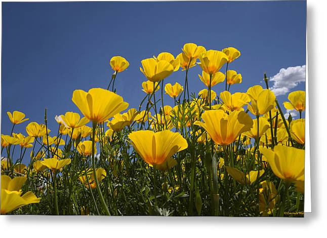 Lucinda Walter Greeting Cards - A Little Sunshine  Greeting Card by Lucinda Walter