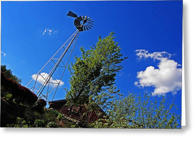 Bully Photographs Greeting Cards - A Little Wind Never Hurt Anyone Greeting Card by Elizabeth Hoskinson