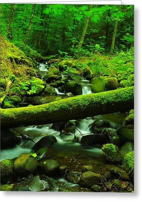 Moss Greeting Cards - A log over water Greeting Card by Jeff  Swan