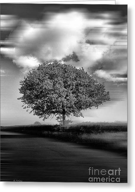 Farmers Field Greeting Cards - A Lone Tree in the Meadows Greeting Card by Rene Triay Photography