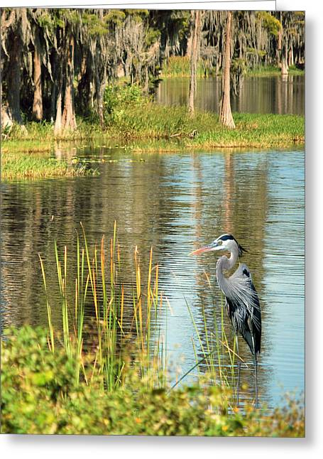 Great Birds Greeting Cards - A Lovely Day Greeting Card by Adele Moscaritolo