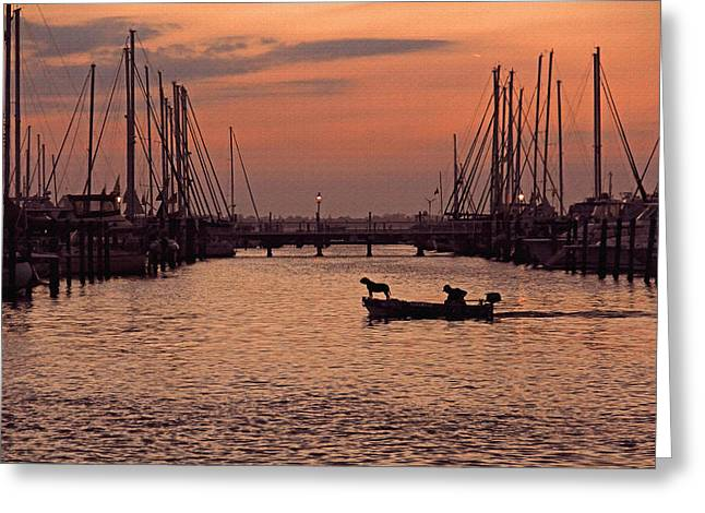 Docked Sailboats Greeting Cards - A Man and His Dog by H H Photography of Florida Greeting Card by HH Photography of Florida