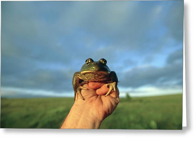 Model Released Photography Greeting Cards - A Man Holds A Frog In Front Greeting Card by Joel Sartore