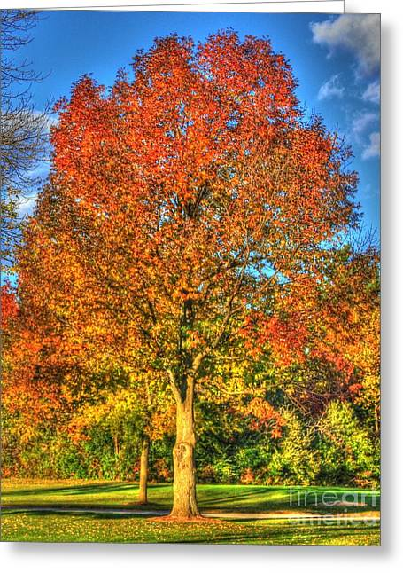 Signora Greeting Cards - A Michigan Fall-2 Greeting Card by Robert Pearson