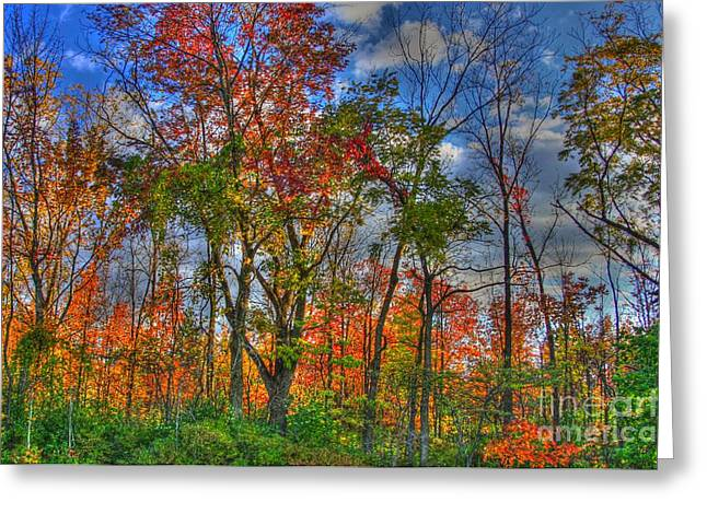 Signora Greeting Cards - A Michigan Fall Greeting Card by Robert Pearson