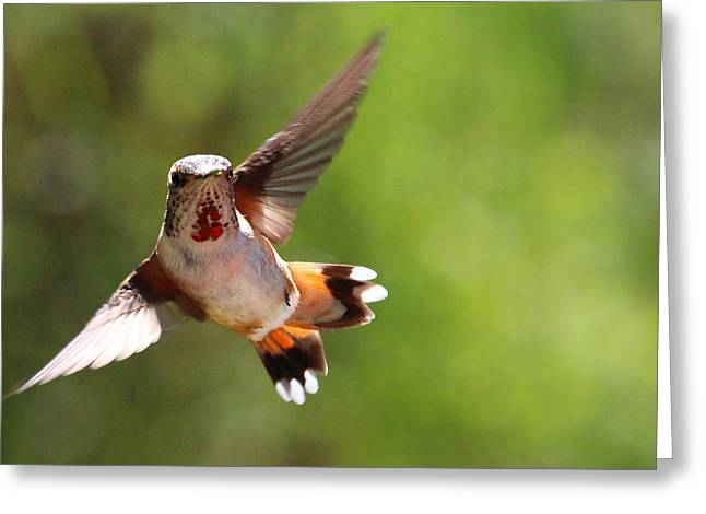 Flying Animal Greeting Cards - A Miraculous Balance Greeting Card by Rory Sagner