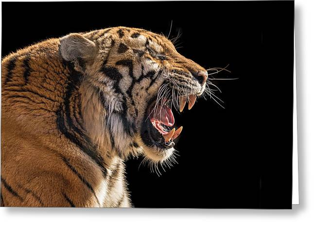A Model Tiger Greeting Card by Pat Eisenberger