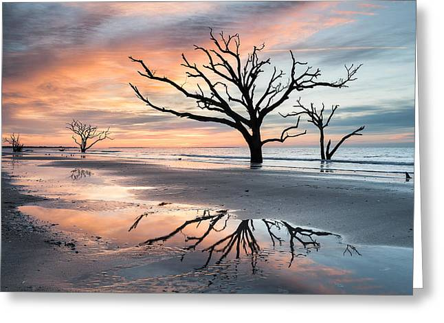 Dead Tree Greeting Cards - A Moment of Reflection - Charlestons Botany Bay Boneyard Beach Greeting Card by Mark VanDyke