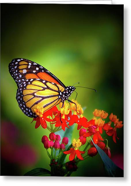 A Monarch In The Garden Greeting Card by Mark Andrew Thomas