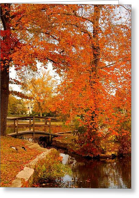 Canadian Nature Scenery Greeting Cards - A Morning In Autumn - Lake Carasaljo Greeting Card by Angie Tirado