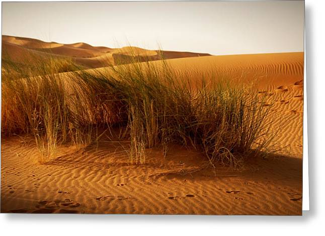 Sand Patterns Greeting Cards - A moroccan desert scenery with desert grass plantation dunes on Greeting Card by Jozef Klopacka