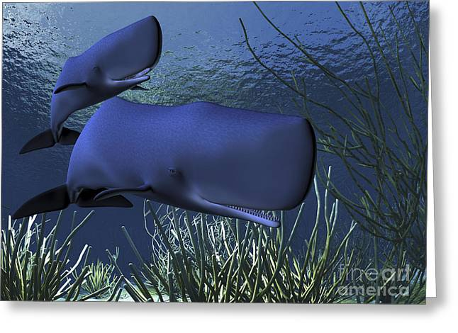 A Mother Sperm Whale Escorts Her Calf Greeting Card by Corey Ford