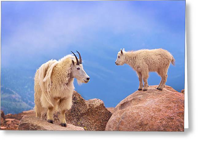 Colorado Greeting Cards - A Mothers Smile Greeting Card by David Scarbrough