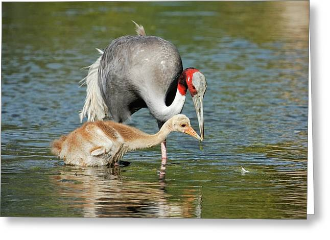 Animals Love Greeting Cards - A Mothers Touch Greeting Card by Dawn Currie