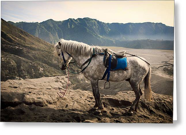 Spotted Horse Greeting Cards - A Mountain Break Greeting Card by Fancy Crave1