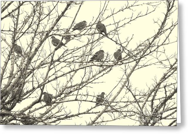Bird Watcher Greeting Cards - A Mourning Of Doves Greeting Card by Joe Jake Pratt