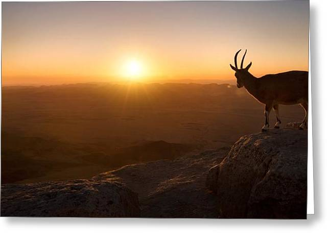 A New Day Greeting Card by Nadav Jonas